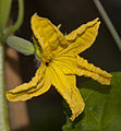Cucumber (3758409143).jpg
