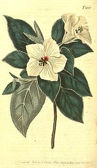 Curtis's botanical magazine (10596065205).jpg
