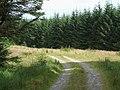 Cwm Dulas Plantation East, Ceredigion - geograph.org.uk - 929512.jpg