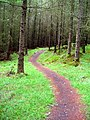 Cycle Trail at Kirroughtree - geograph.org.uk - 431689.jpg