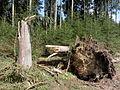 D-BW-SIG-Pfullendorf - Sturmschaden nach Orkan Niklas im Spitalwald 002.JPG