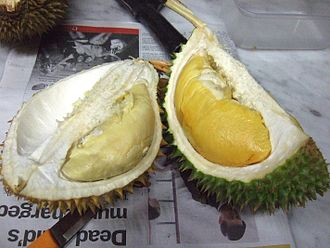 Durian - Different cultivars of durian often have distinct colours. D101 (right) has rich yellow flesh, clearly distinguishable from another variety (left).