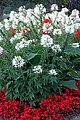 DSC09419 - Niagara Flowers (37051511642).jpg