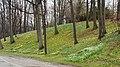 Daffodil Hill - Lake View Cemetery (32083826150).jpg