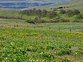 Dalles Mountain Ranch at Columbia Hills State Park in Washington 2.jpg