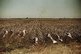 Day laborers picking cotton, near Clarksdale, Miss.1a34342v.jpg