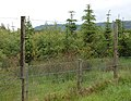 Deer fence around plantation near East Bolton - geograph.org.uk - 1364107.jpg