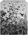 Die Gartenlaube (1879) b 389.jpg