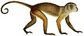 Die Säugthiere in Abbildungen nach der Natur, mit Beschreibungen (Plate 8) (white background).jpg