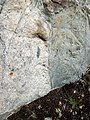 Dike intruding tillite (Nipissing Diabase & Gowganda Formation, Paleoproterozoic; Percival Lake roadcut, Ontario, Canada) 12 (33850661138).jpg