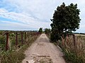 Dirt road near Bierazinskaje - panoramio.jpg