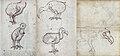 Dodo (VOC Gelderland, 1602).jpg