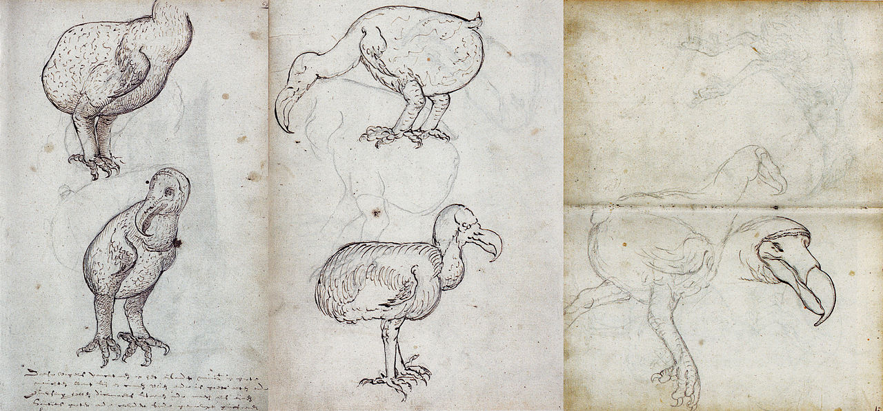 Gizem Dolu Kuş: Dodo Kuşu
