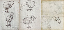 Several pages of a journal containing sketches of live and dead Dodos