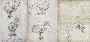 Cornelis Matelief de Jonge - Drawings of the dodo from the travel journal of VOC-ship 'Gelderland' (1601–1603)
