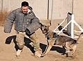 Dogs defend Bagram 121221-F-LR266-090.jpg
