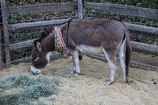 Donkey (27732491454).jpg