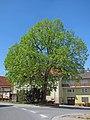 Dorflinde in Gauaschach.jpg