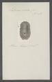 Doris solea - - Print - Iconographia Zoologica - Special Collections University of Amsterdam - UBAINV0274 080 21 0028.tif
