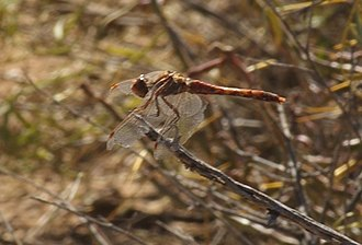Bitter Lake National Wildlife Refuge - A dragonfly in the fall