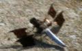 Dragonfly ran-400.jpg