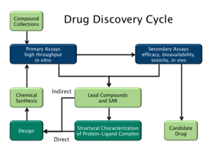 Drug design - Drug discovery cycle highlighting both ligand-based (indirect) and structure-based (direct) drug design strategies.