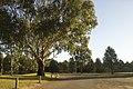 Dubbo NSW 2830, Australia - panoramio (179).jpg