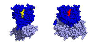 EF-Tu - Image: EF Tu conformations
