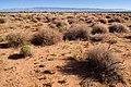 East of the Jarilla Mountains - Flickr - aspidoscelis (6).jpg