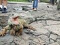 Ecuador - Guayaquil - Parque seminario - Parque de las iguanas.jpg