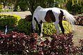 Egret and Horse (14387676607).jpg