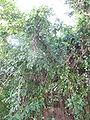 Ein Karem IMG 0756.JPG