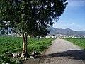 Ejido - panoramio.jpg