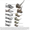 Elasmotheriinae evolution.png