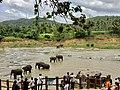 Elephant Bathing in Sri Lanka.jpg