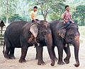 Elephant nature park elephants.jpg