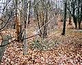 Entenschnabel - Grundstück9Süd.jpg
