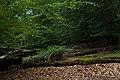 Epping Forest - panoramio - Alexey Komarov (1).jpg