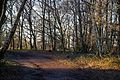Epping Forest High Beach Waltham Abbey Essex England - bridleway.jpg