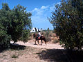 Equitation Mezraya.jpg