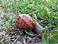 Escargot de Strasbourg - 5.jpg