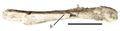 Eshanosaurus.png