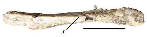 Eshanosaurus