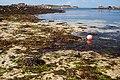 Estran Breton (Finitère) 01.jpg