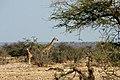 Etosha, Namutoni - panoramio - Frans-Banja Mulder (3).jpg