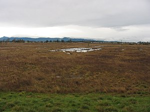 Willamette Valley (ecoregion) - Wetlands near Eugene, Oregon