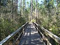 FL Blackwater River SP bdwlk04.jpg