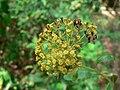Fale - Giardini Botanici Hanbury in Ventimiglia - 596.jpg