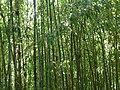 Fale - Giardini Botanici Hanbury in Ventimiglia - 685.jpg
