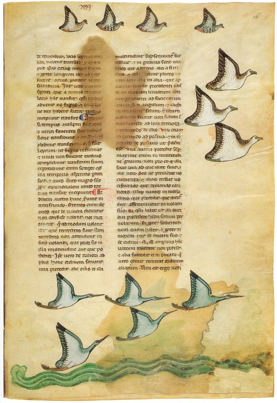 Falkenbuch
